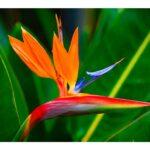 Flores Exóticasbogota