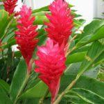 Flores económicas en bogota