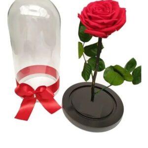 Rosas preservadas en Vaupés