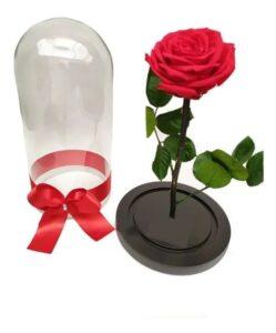 Rosas preservadas en Chia