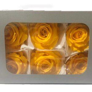 Rosas preservadas en Bogota