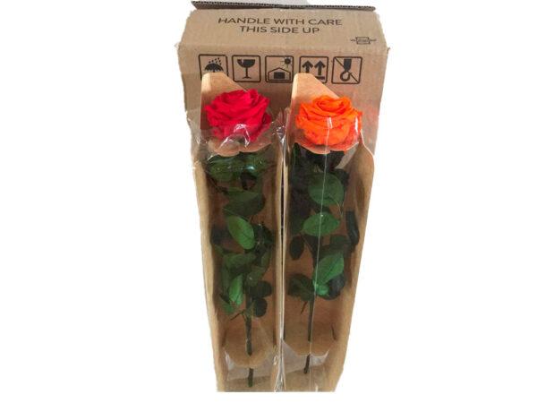 Rosas eternas al por mayor